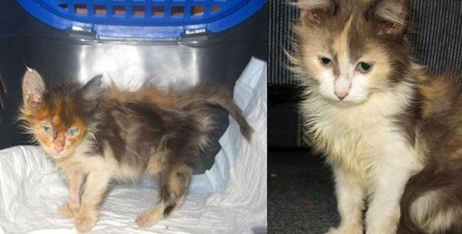 Gato Abandonado e Salvo