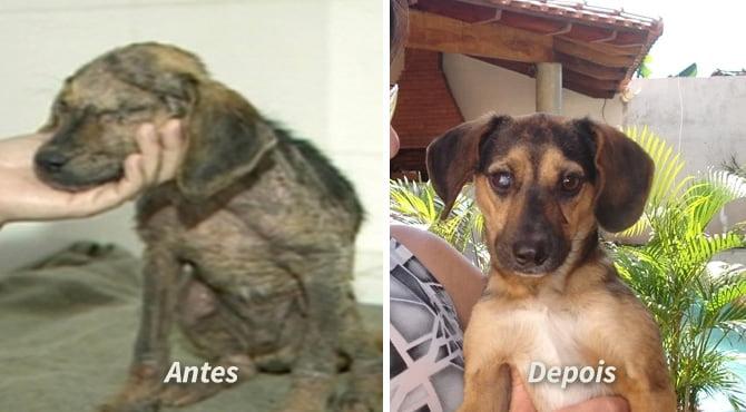 Cachorrinho Titã