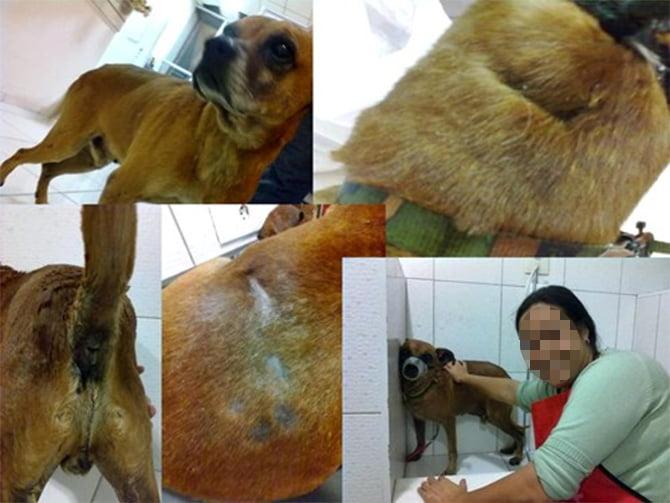 cachorro-maltratado
