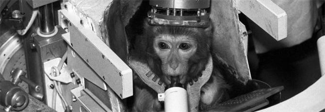 Macaco no espaço