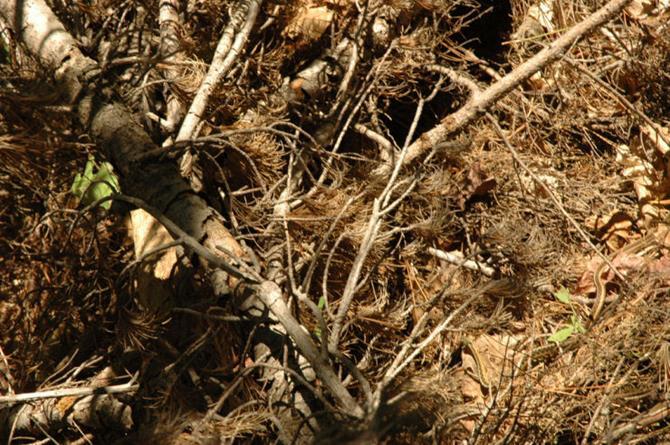 animais-camuflados-20