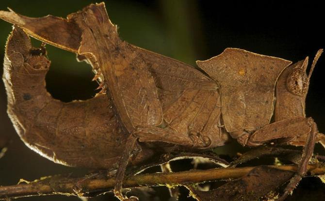 animais-camuflados-23
