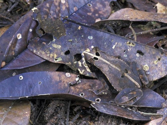 animais-camuflados-25
