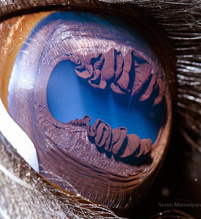 Olho da Lhama