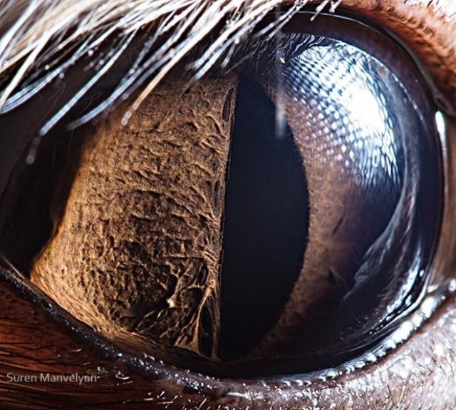 Olho da Raposa