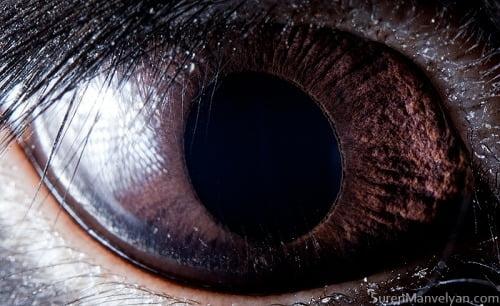 Olho do Coelho Preto