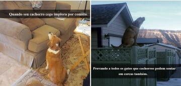 30 Flagrantes mostrando cachorros em situações hilárias