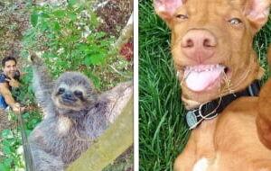 15 Animais que tiraram selfies melhor que muita gente
