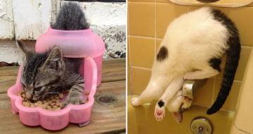 19 Gatos mostrando que a lógica felina não faz sentido