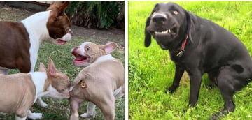 22 Vezes em que os donos compartilharam as fotos mais hilárias de seus cães