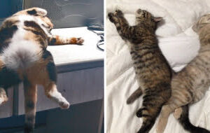 23 Gatos que arranjaram um jeito bem diferente de dormir
