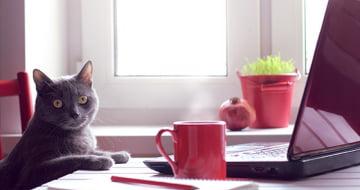 Cutedrop » 5 dicas para deixar seu ambiente de trabalho mais estimulante para a criatividade