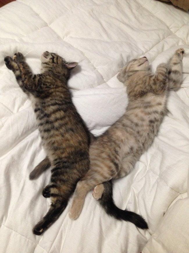 gatos dormindo 13