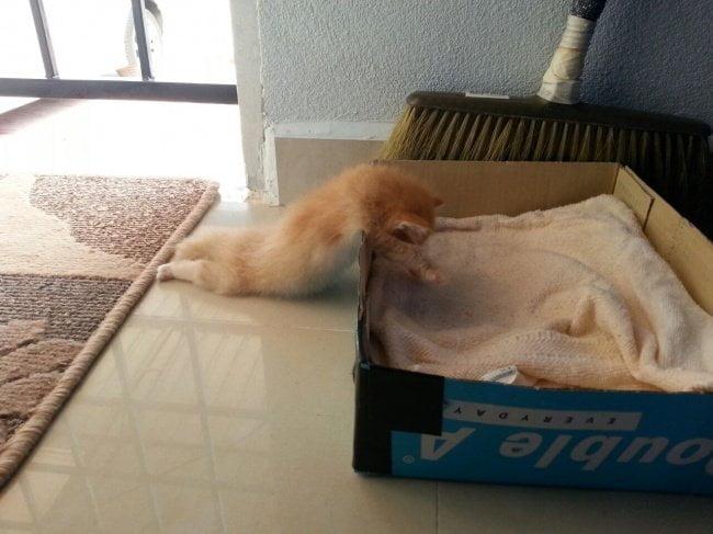 gatos dormindo 15