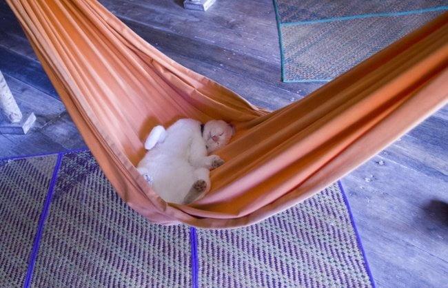 gatos dormindo 2