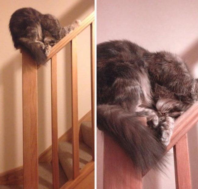 gatos dormindo 21