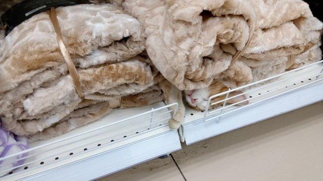 gatos dormindo 5