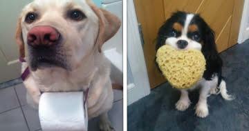 17 Cães que estão pouco se importando se seus donos estão no banheiro