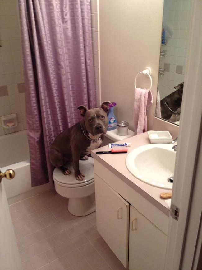 cachorro banheiro10