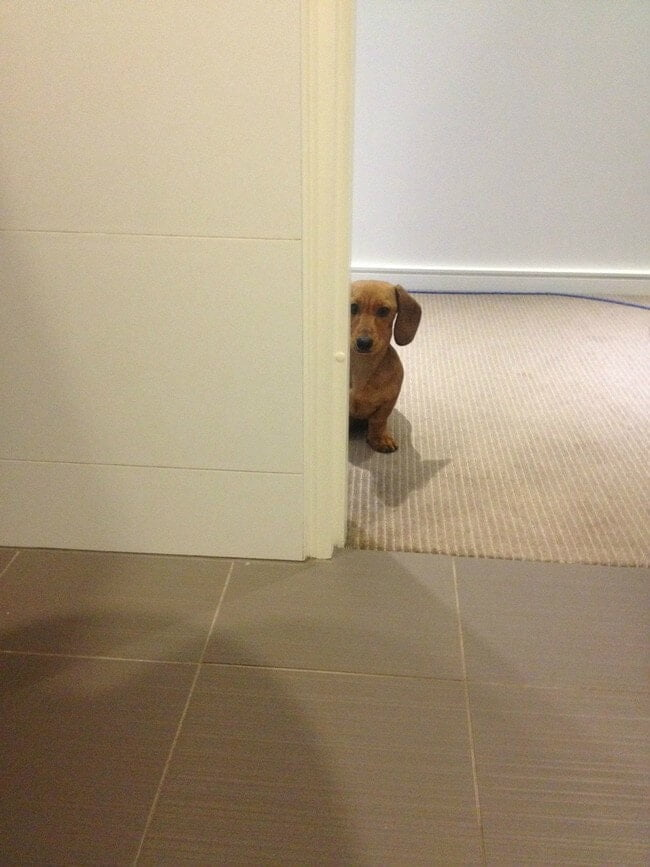 cachorro banheiro11