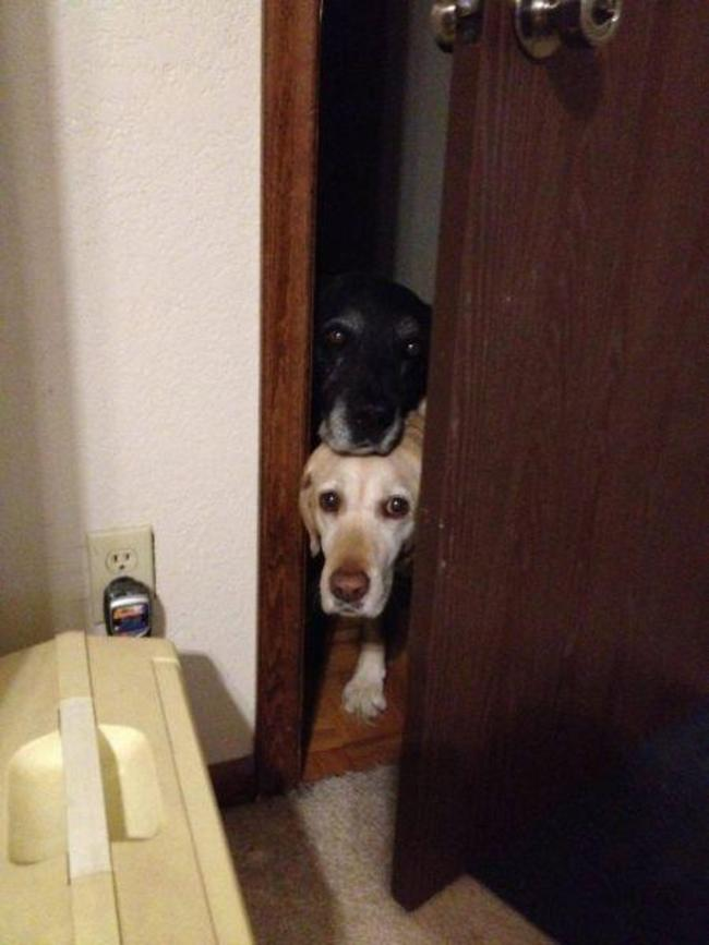cachorro banheiro2