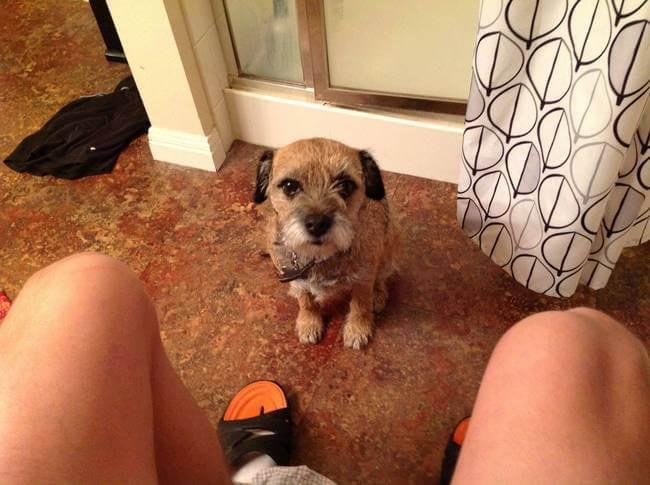 cachorro banheiro7