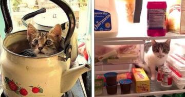 19 Lugares improváveis onde os gatos resolveram se esconder