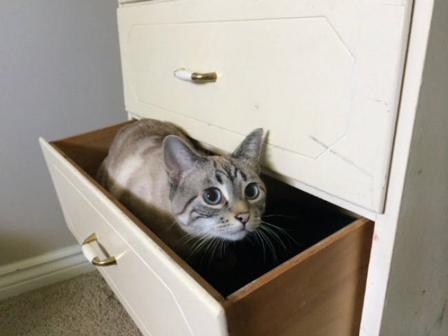 achar gato 1
