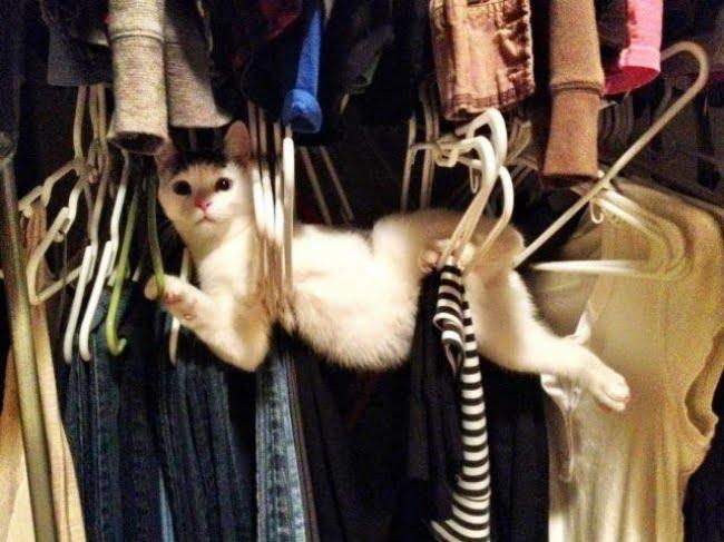 achar gato 11