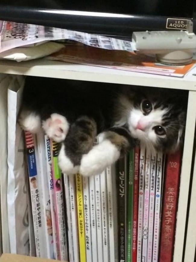 achar gato 13
