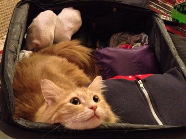 achar gato 3