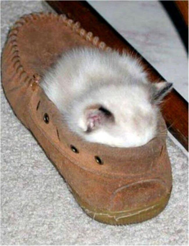 achar gato 4