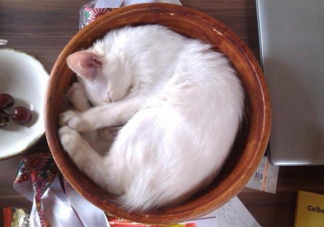 achar gato 8